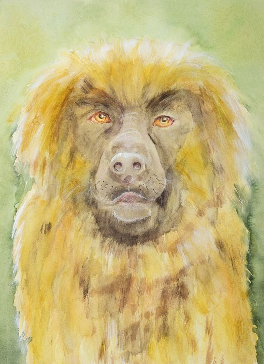 Leonberger portrait of the sweetest - BRISTE