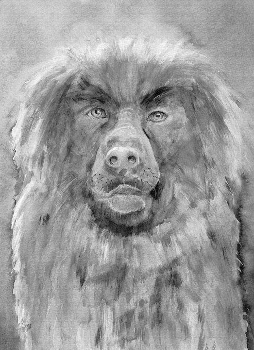 Drawing of Leonberger dog. - BRISTE