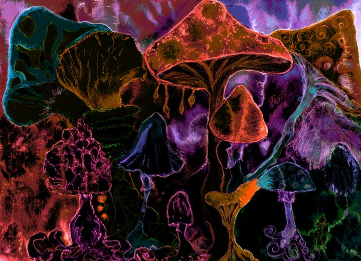 Bright red psychedelic mushrooms. - BRISTE