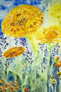 Sunny marigold. - BRISTE