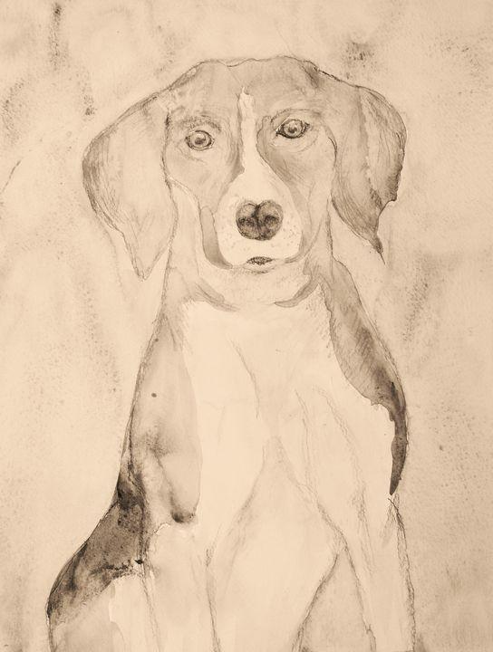 Beagle portrait in sepia tones. - BRISTE
