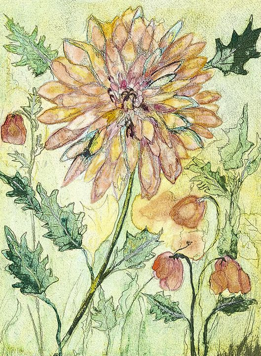 Tinted drawing of a marigold flower. - BRISTE