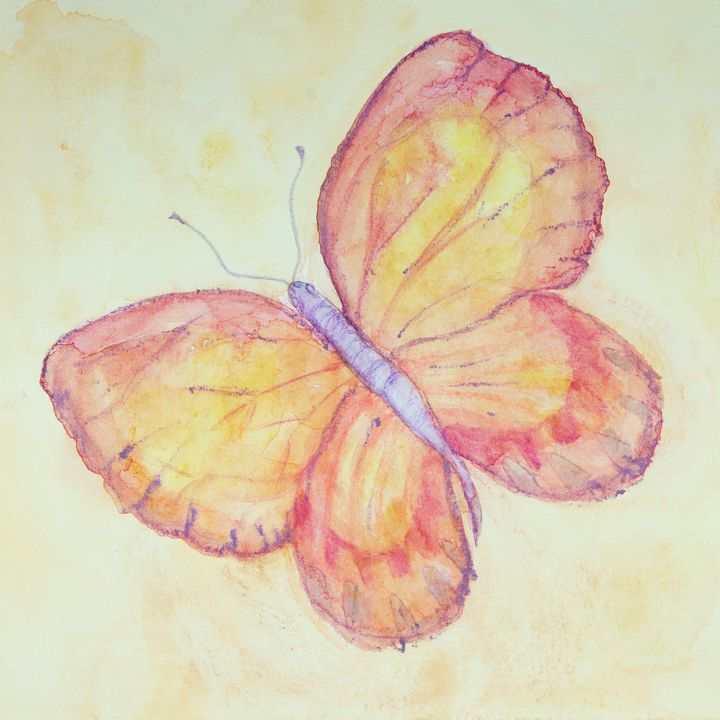 Pink and yellow flying butterfly - BRISTE