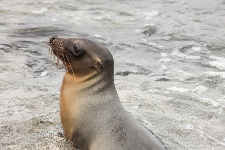 Sea lion sitting in the water. - BRISTE