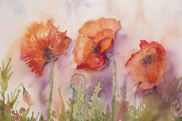Three poppies - BRISTE