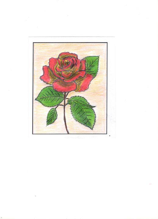 Rose - Nirmala