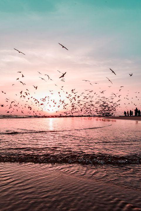 Seagulls - timruivo