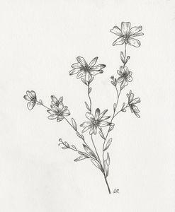 Tickseed Sunflower Pen Drawing