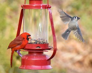 The Intimidating Cardinal