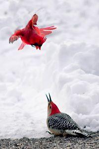 The Territorial Cardinal
