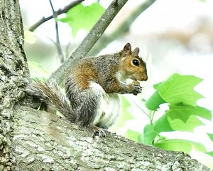 The Contented Squirrel