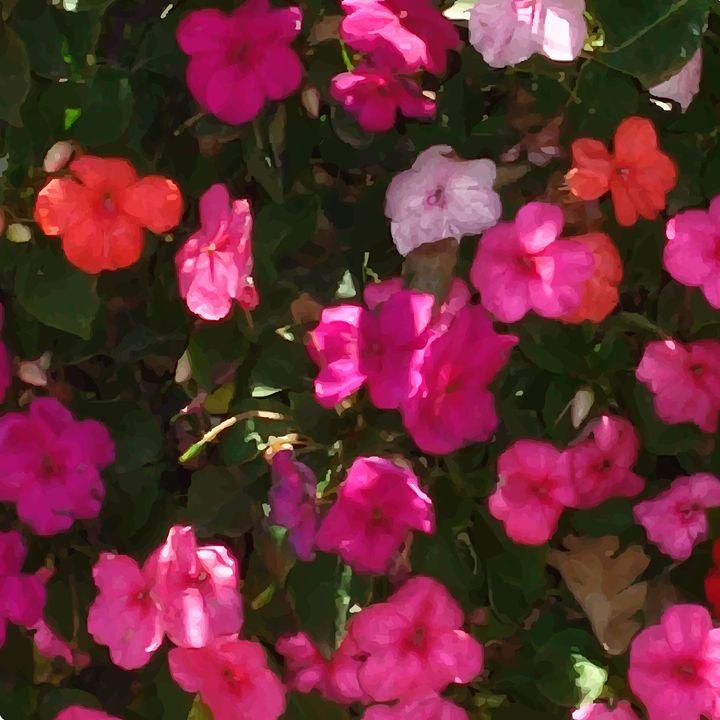 Pink Flowers - Air California