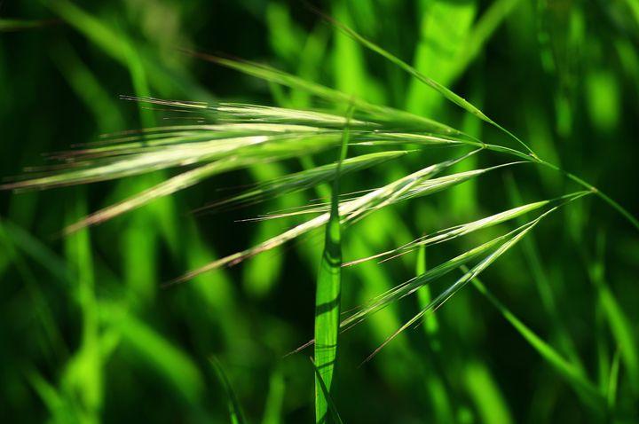 Grass in spring - branimirbelosev