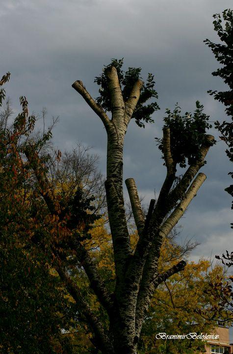 Tree autumn - branimirbelosev