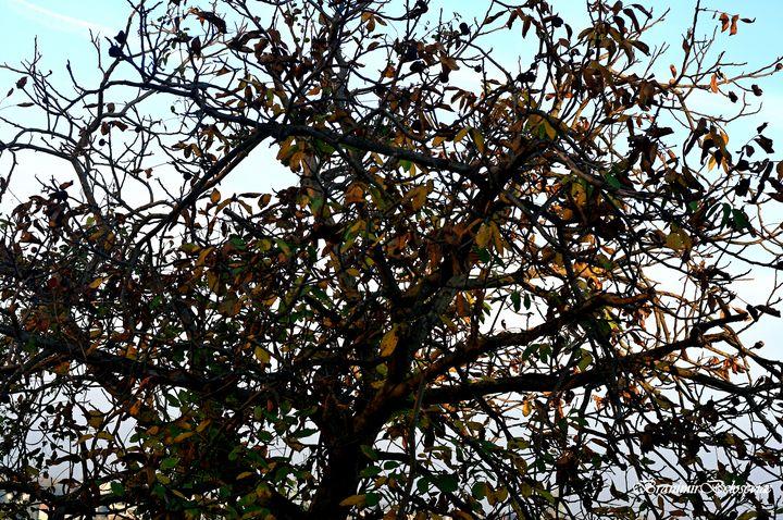 Tree in autumn - branimirbelosev