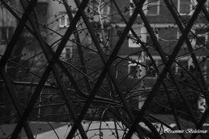 Look  through the lattices