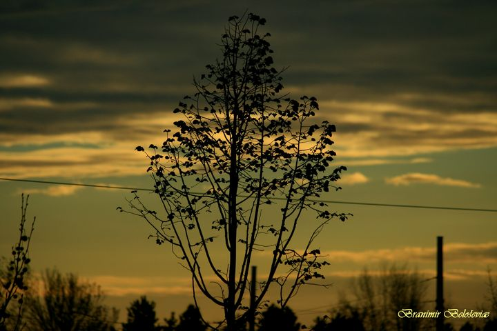 Tree and sunset - branimirbelosev
