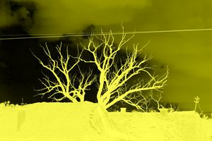 Negative yellow