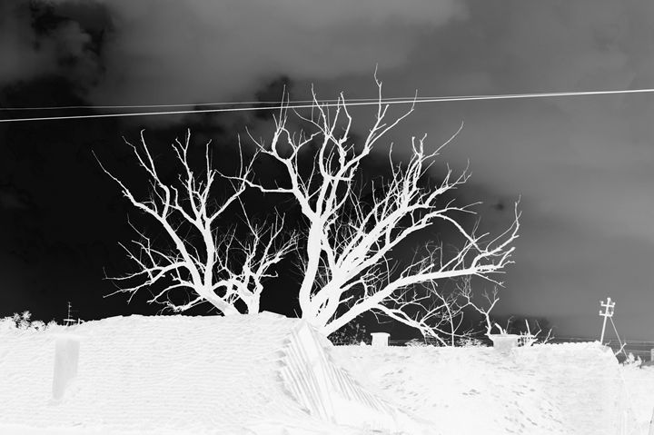 Tree dark - branimirbelosev