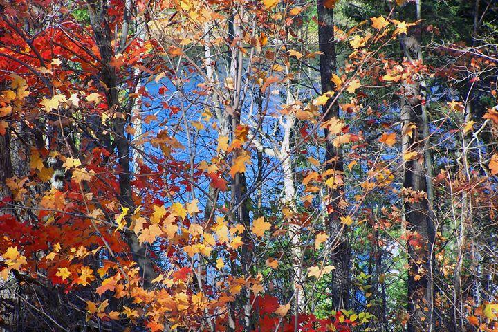 Autumn colours in Arrowhead Park - Carolyn reinhart