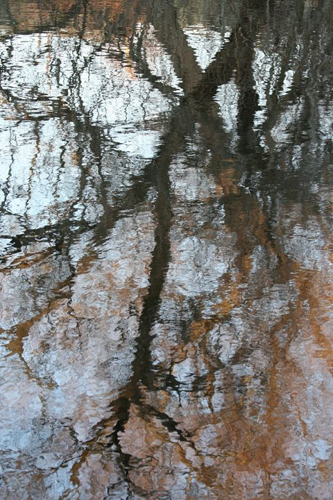 Reflection in Huntsville River - Carolyn reinhart