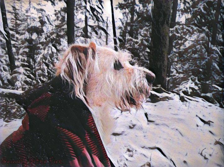 A Dog in Nature - Nima.Jupiter.Fire