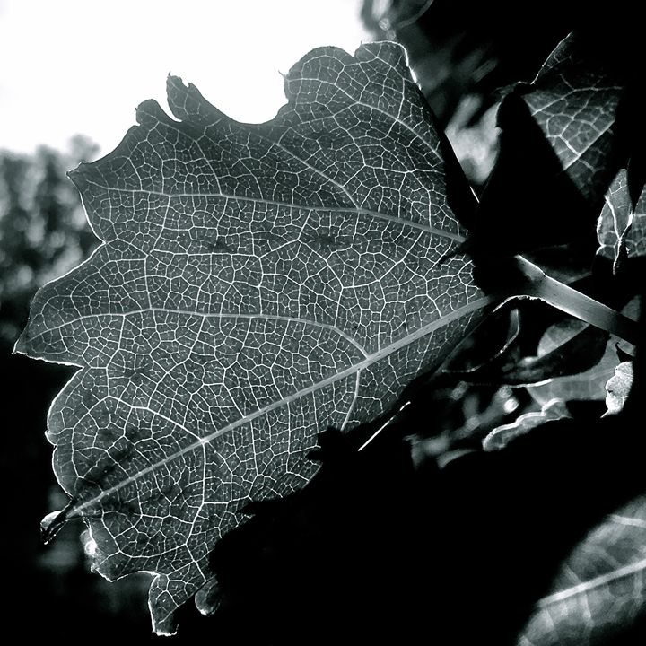 Lauring Leaves 3 - Raw