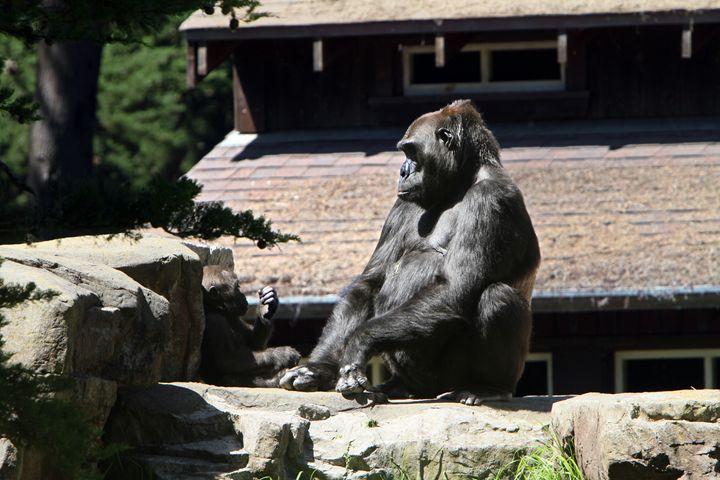 Gorillas - Kimberly Goddard