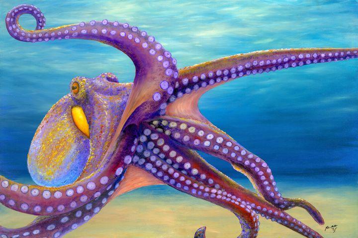 octopus - John Miller