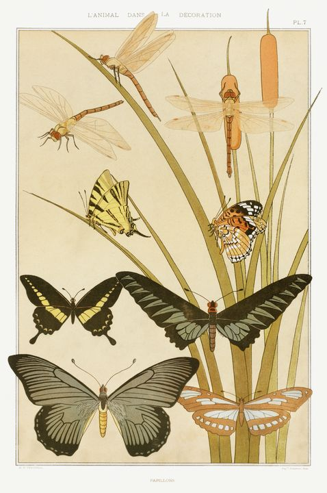 Papillons de L'animal dans la décora - arthurazer