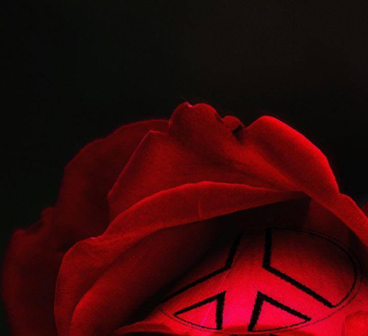 Peace Rose - LooseGoose Art