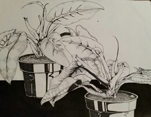 Ink Plant - Unfinished Challenge