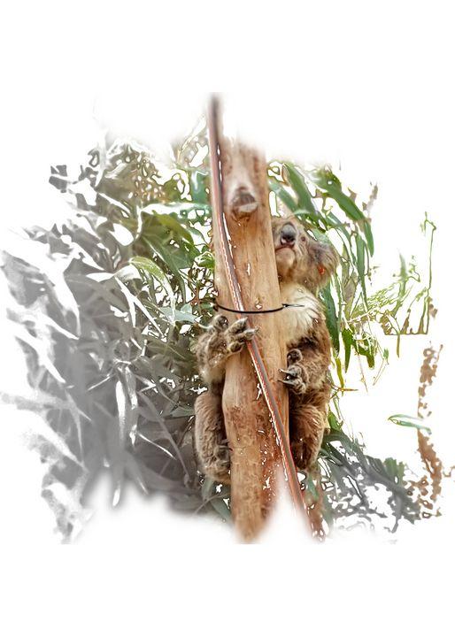 Koala Portrait - Thanatus