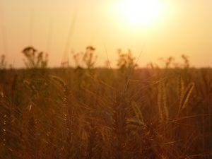 sun over the field