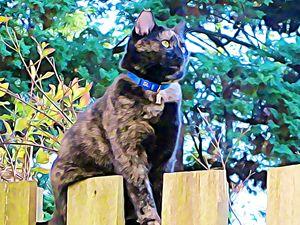 Cat on the Fence - Leslie Kinghorn