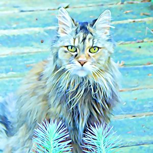 Maine Coon Beauty - Leslie Kinghorn