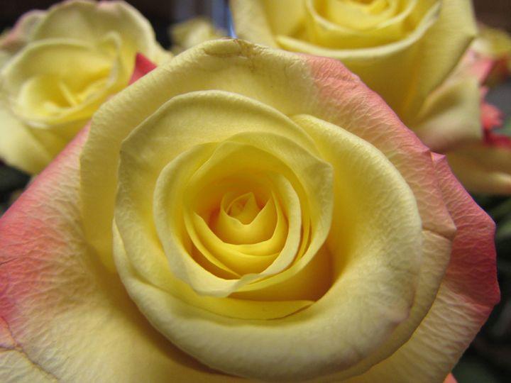 Yellow Dreams - Jake's Fine Art & Photography