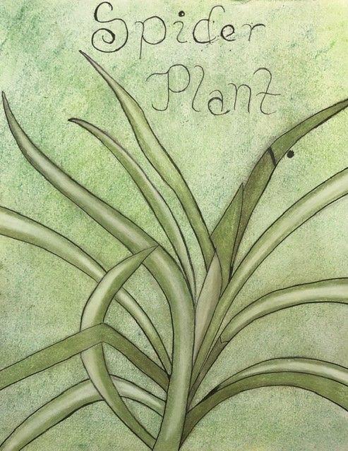 Spider Plant Study (2019-2020) - Heather Koschalk