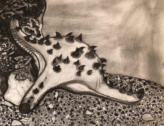 Chocolate Chip Starfish (2020) - Heather Koschalk