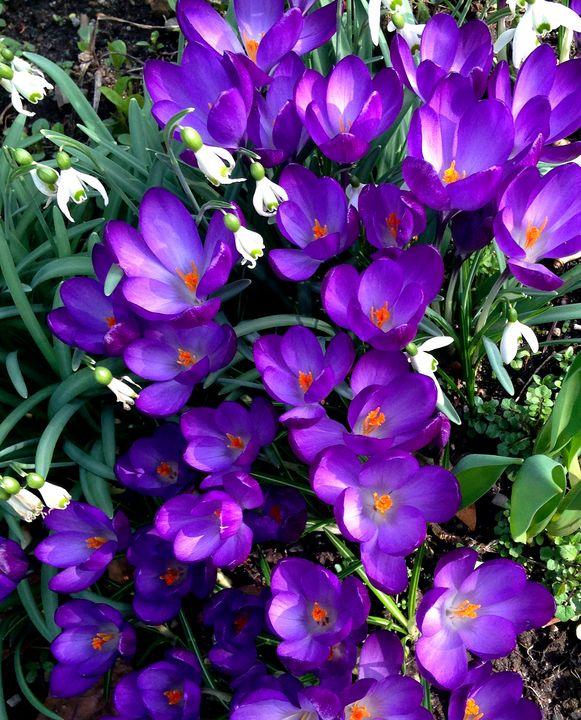 Violet and Saffron - byteSMART Digital Visions