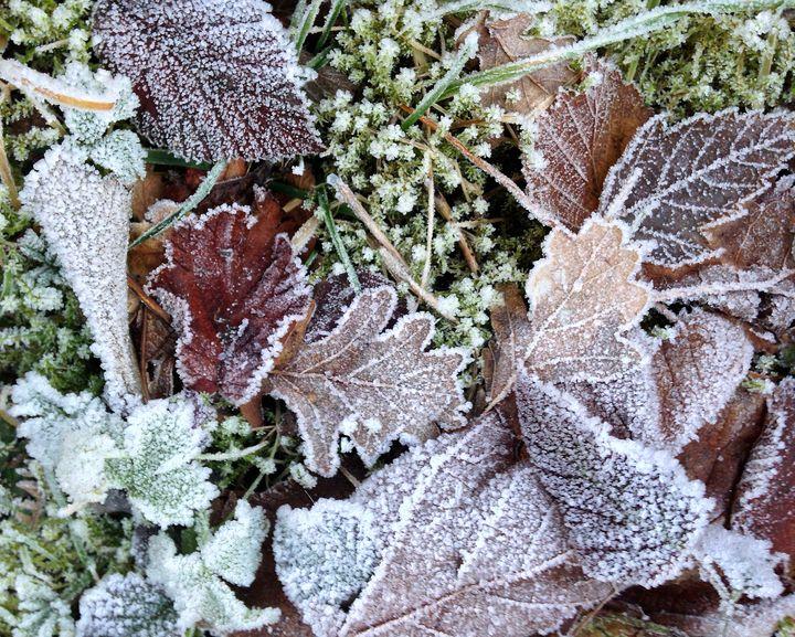 Frosty Foliage - byteSMART Digital Visions
