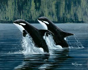Orcas Mother and Son