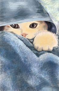 shغ cat