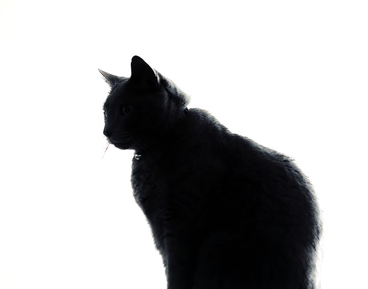 Silhouette of sitting cat - Laurance Grube Photography