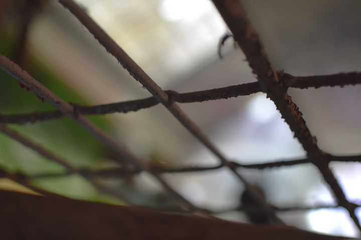 Chain Link - Laurance Grube Photography