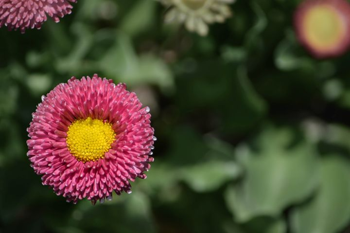 Flower Close Up - Laurance Grube Photography