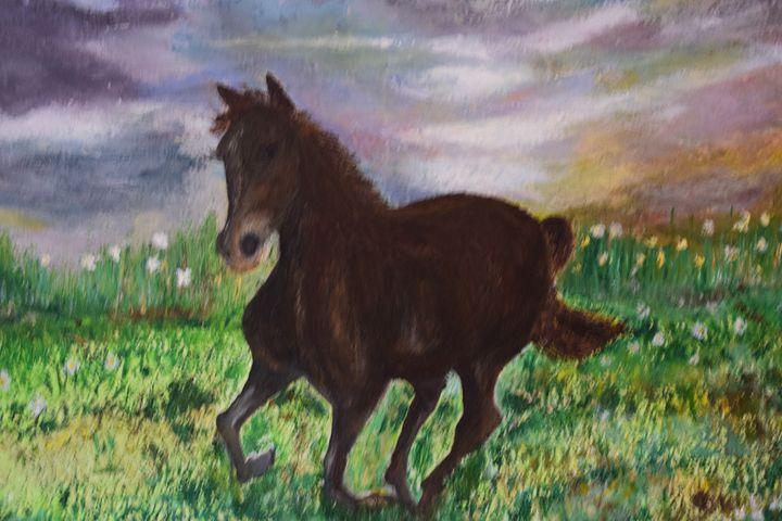 Wild Horses - My view of nature