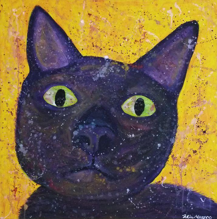 Skittles The Cat - Julia's gallery