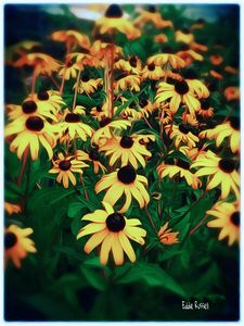 Owensboro Flowers