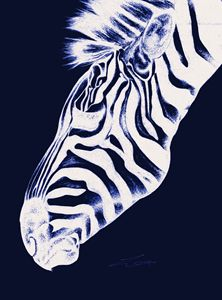 Zebra - Emma Louise Jones